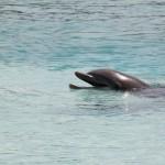 Harikalar Diyarı Bahamalar'da Yunuslar