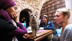 Kedili Kafe