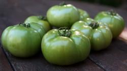 Yeşil Domatesli Bir Yemek Tarifi
