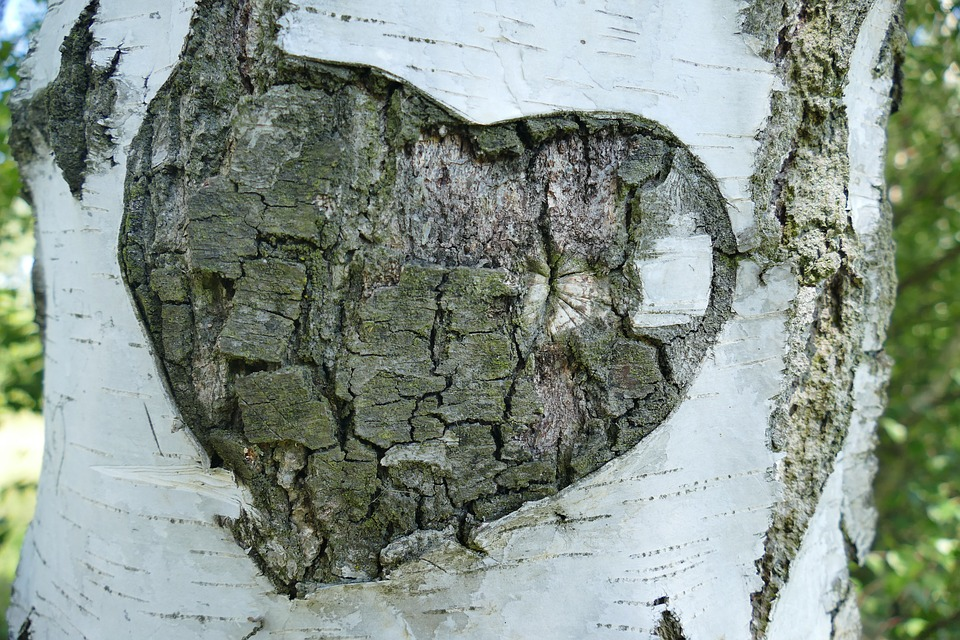 Sahte Aşk